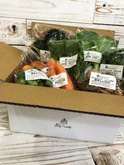 画像1: 厳選野菜セット (S)