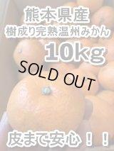 熊本県産 皮まで安心!!樹成り完熟の温州みかん 10kg