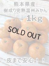 熊本県産 皮まで安心!!樹成り完熟の温州みかん 1kg