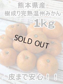 画像1: 熊本県産 皮まで安心!!樹成り完熟の温州みかん 1kg