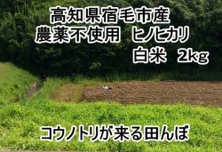 画像1: 高知県の西端、宿毛市産  「ヒノヒカリ」 白米 2キロ (農薬不使用)