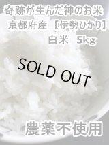 奇跡が生んだ神のお米 京都府産 【伊勢ひかり】 白米 5kg 農薬不使用!!