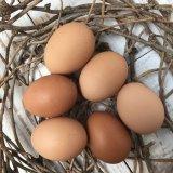 兵庫県 そらまめ農場 伸び伸びと飼育された元気な親鶏がうんだ美味しい「平飼いの卵」 6個入り